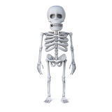 3d Skeleton stands at ease Royalty Free Stock Photography