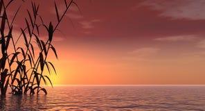 D-solnedgångtrost Arkivfoton