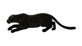 3D som framför den svarta pantern på vit Arkivfoton