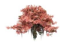 3D som framför det Anciant trädet på vit Arkivfoto