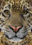3D som framför Jaguar Arkivbilder