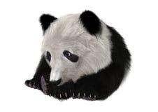 3D som framför Panda Bear Cub Arkivfoton