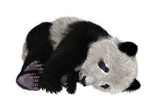 3D som framför Panda Bear på vit Fotografering för Bildbyråer