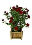 3D som framför röda Rose Bush på vit Royaltyfri Foto