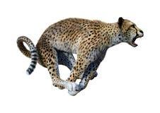 3D som framför stora Cat Cheetah på vit royaltyfri illustrationer