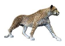 3D som framför stora Cat Cheetah på vit royaltyfri bild