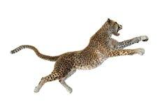 3D som framför stora Cat Cheetah på vit Royaltyfri Fotografi