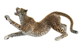 3D som framför stora Cat Cheetah på vit Arkivbild