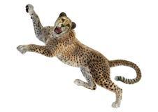 3D som framför stora Cat Cheetah på vit Royaltyfria Bilder