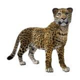 3D som framför stora Cat Jaguar Arkivfoton