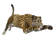 3D som framför stora Cat Jaguar Arkivbild