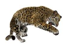3D som framför stora Cat Jaguar på vit Royaltyfria Bilder