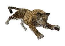 3D som framför stora Cat Jaguar på vit Arkivfoto