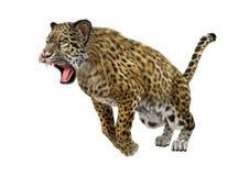 3D som framför stora Cat Jaguar på vit Arkivbild