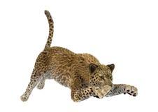 3D som framför stora Cat Leopard Arkivfoto