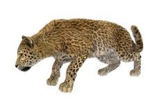 3D som framför stora Cat Leopard Royaltyfri Bild