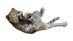 3D som framför stora Cat Leopard på vit Royaltyfri Bild