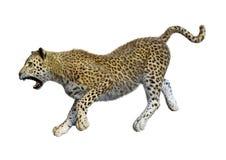 3D som framför stora Cat Leopard på vit Royaltyfri Fotografi