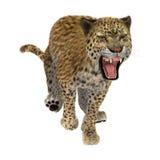 3D som framför stora Cat Leopard på vit Arkivbilder