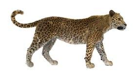 3D som framför stora Cat Leopard på vit Royaltyfria Foton