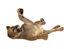 3D som framför stora Cat Puma på vit Royaltyfri Fotografi