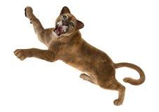 3D som framför stora Cat Puma på vit Arkivfoton