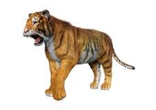 3D som framför stora Cat Tiger på vit stock illustrationer