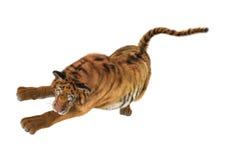 3D som framför stora Cat Tiger på vit Royaltyfri Fotografi
