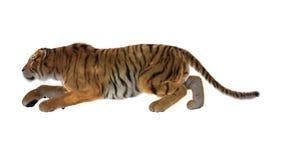 3D som framför stora Cat Tiger på vit Fotografering för Bildbyråer