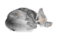3D som framför den Fennec räven på vit Royaltyfri Fotografi