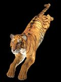 3D som hoppar tigern royaltyfri fotografi