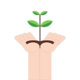 Dé sostener el pequeño árbol en el fondo blanco, ejemplo del vector en diseño plano Foto de archivo libre de regalías