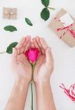 Dé sostener la flor de la rosa del rosa con las cajas de regalo, en la tabla blanca, preparándose para el regalo del día de tarje Imagen de archivo libre de regalías