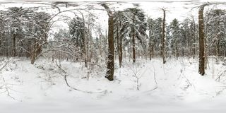 3D spherical panorama of winter forest with snow and pines with 360 degree viewing angle. Ready for virtual reality in vr. Full stock photos