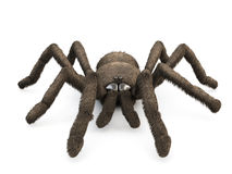 3d spider  on white background. Stock Photography