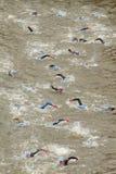 d sseldorf triathlon Zdjęcie Royalty Free