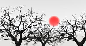 D_Sunset_Tree Royalty Free Stock Photography