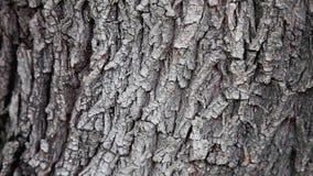 D?tail d'arbre en nature banque de vidéos