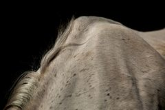 D?tail de crini?re sur le cheval blanc de retour images libres de droits