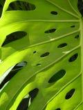 D?tail d'une usine : beaux lignes, texture et trous photographie stock libre de droits