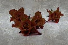 3d tapeta, róże na koronce, betonowa ściana textured tło Fresku skutek royalty ilustracja
