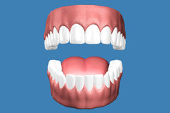 3D teeth close up. Stock Images