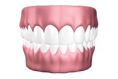3D teeth close up. Royalty Free Stock Photos