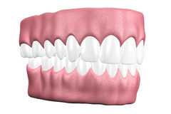 3D teeth close up. Royalty Free Stock Photo