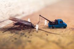 3D teruggevende samenstelling met een foto van een dode kakkerlakkenlyi Stock Foto's