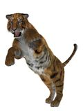3D tiger. Rendered tiger illustration isolated on white Royalty Free Stock Image
