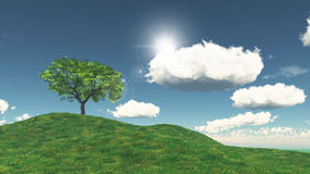 3D tree on a grassy hill Stock Images