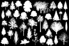 3d tree set collection plant isolated illustration alpha channel. Black and white monotone Stock Photos