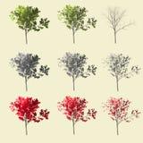 3d tree summer autumn winter season set collection Stock Image