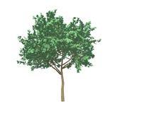 3d tree on white vector illustration
